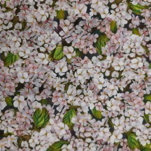 Tessuto in cotone americano - fiori di ciliegio - cherry blossom - Filomania