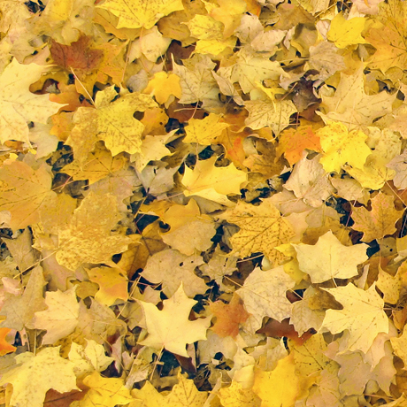 Tessuto Cotone - foglie - giallo - Filomania