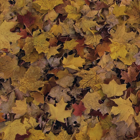 Tessuto Cotone - foglie - marrone - Filomania