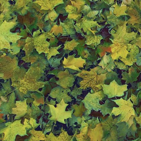 Tessuto Cotone - foglie - verde - Filomania